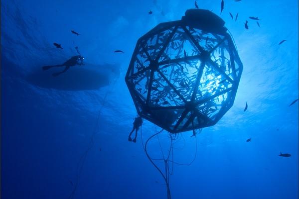 Công nghệ nuôi cá Kampachi